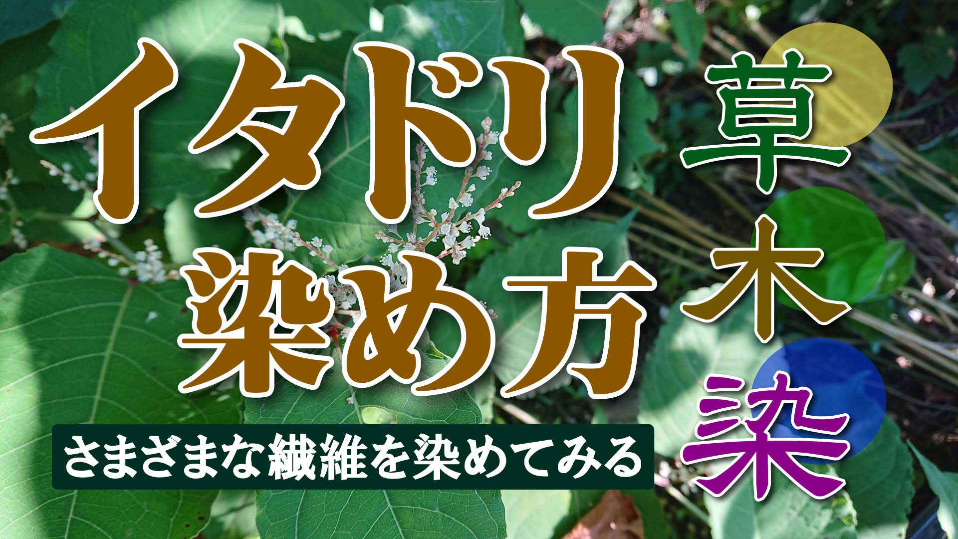 【草木染】イタドリ染め方 中媒染で濃く染める方法