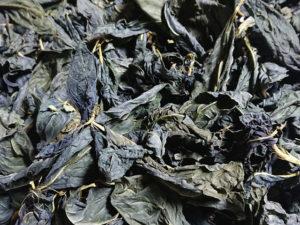 灰汁発酵建て ① ――藍葉の天日干し