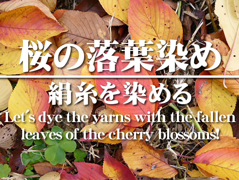【草木染】桜の紅葉(落ち葉)染めの方法