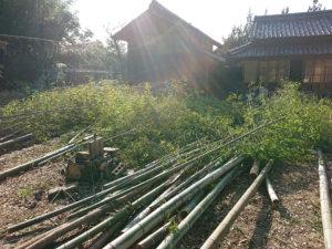 放棄竹林と里山再生