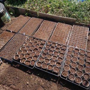 米の栽培を始めます。